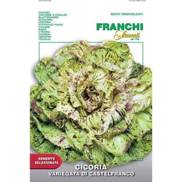 Semente selezionata cicoria variegata di castelfranco