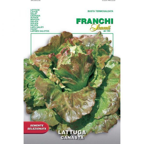 Semente selezionata lattuga maravilla de verano canasta