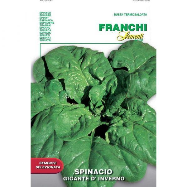 Semente selezionata spinacio gigante d'inverno