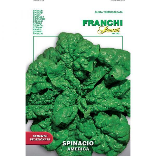 Semente selezionata spinacio america
