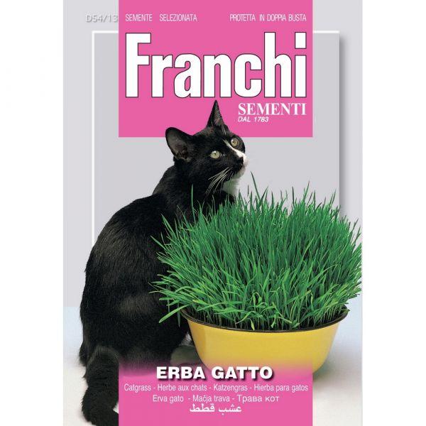 Semente aromatica erba gatto
