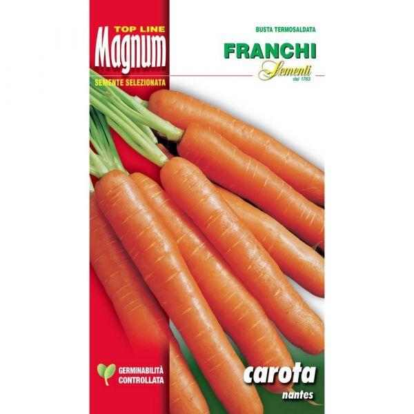 Semente magnum carota nantes