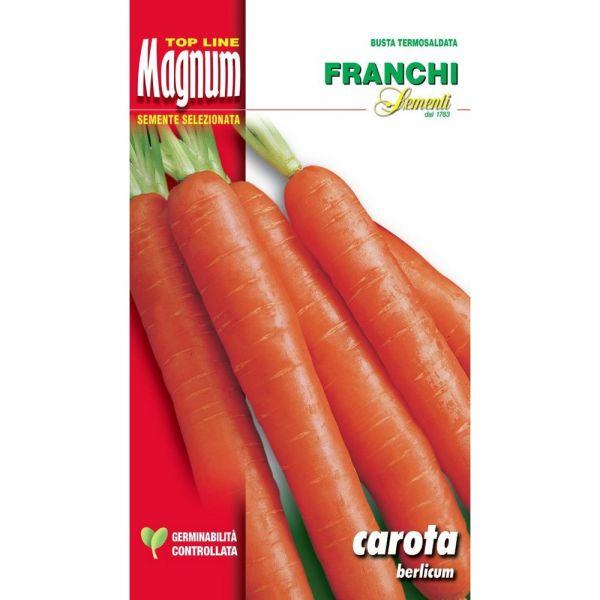 Semente magnum carota berlicum