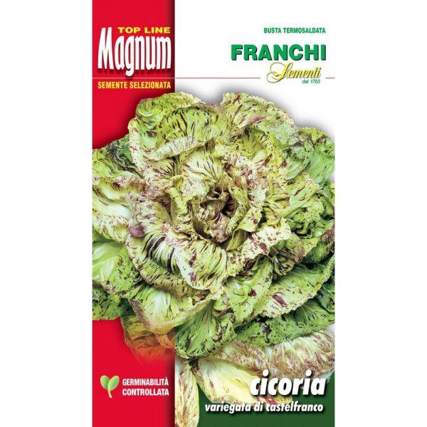 Semente magnum cicoria variegata di castelfranco