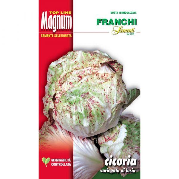 Semente magnum cicoria variegata di lusia