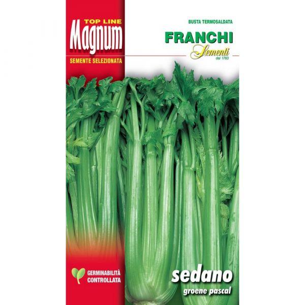 Semente magnum sedano groene pascal