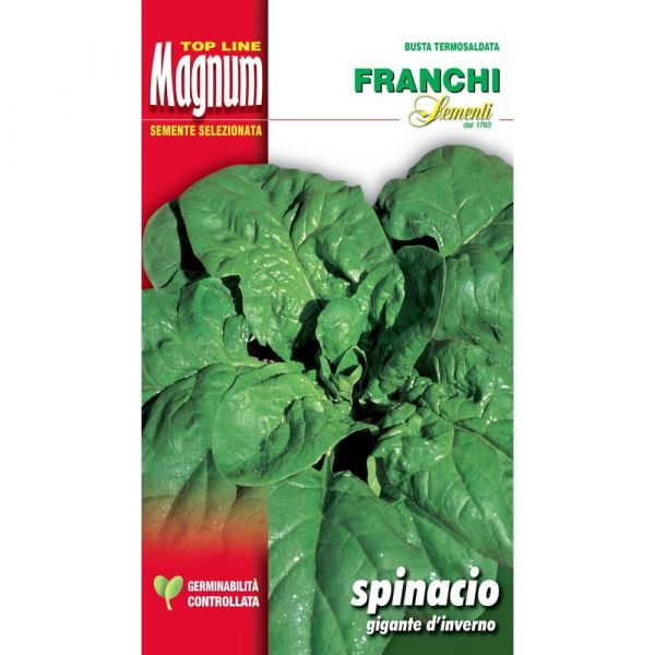 Semente magnum spinacio gigante d'inverno