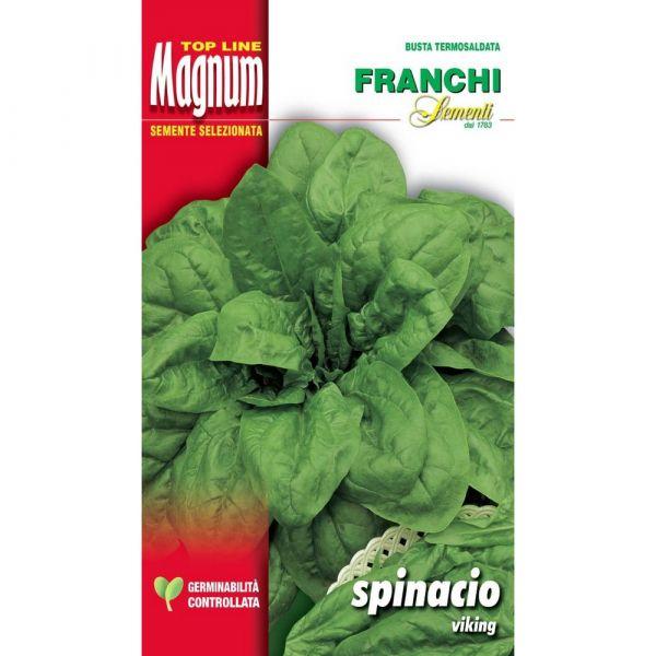 Semente magnum spinacio viking
