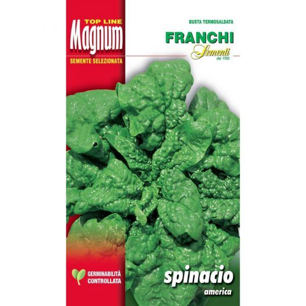 Semente magnum spinacio america