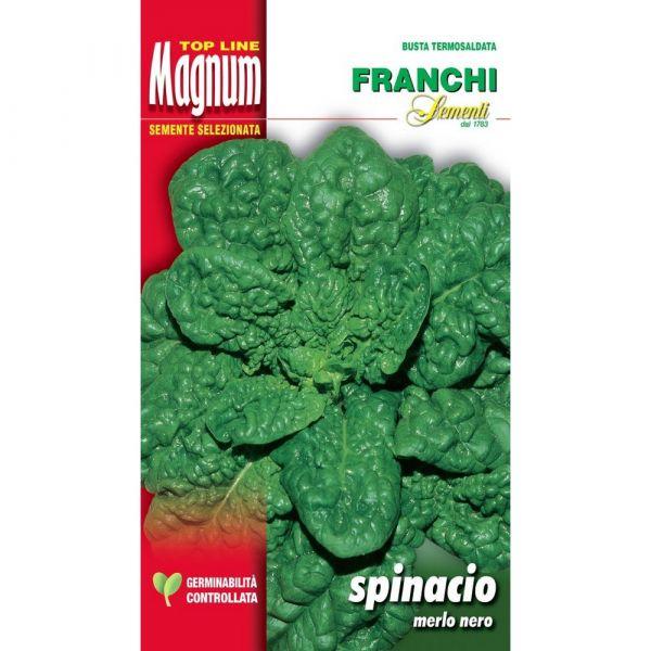 Semente magnum spinacio merlo nero