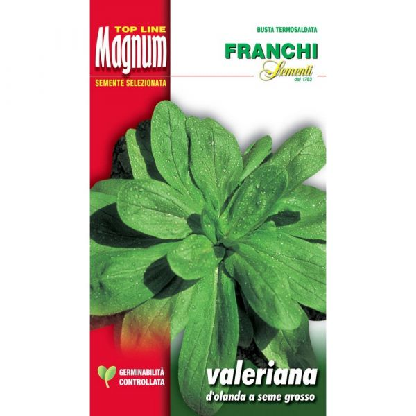 Semente magnum valeriana d'olanda a seme grosso