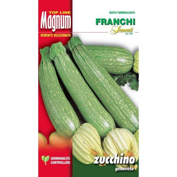 Semente magnum zucchino genovese