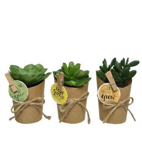 Pianta succulenta in vaso di carta