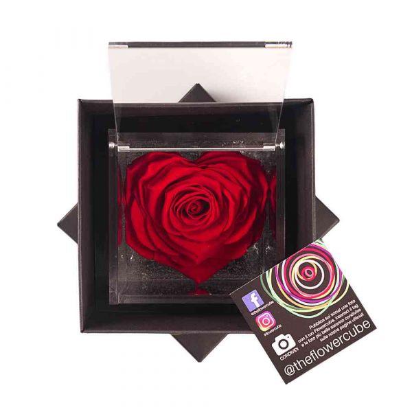 rosa-stabilizzata-rossa-10x10 cm