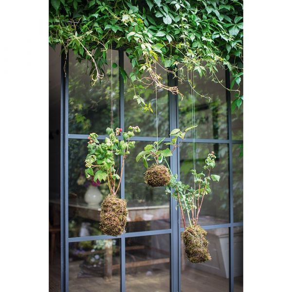 Giardini interni. idee e ispirazioni per un giardino dentro casa