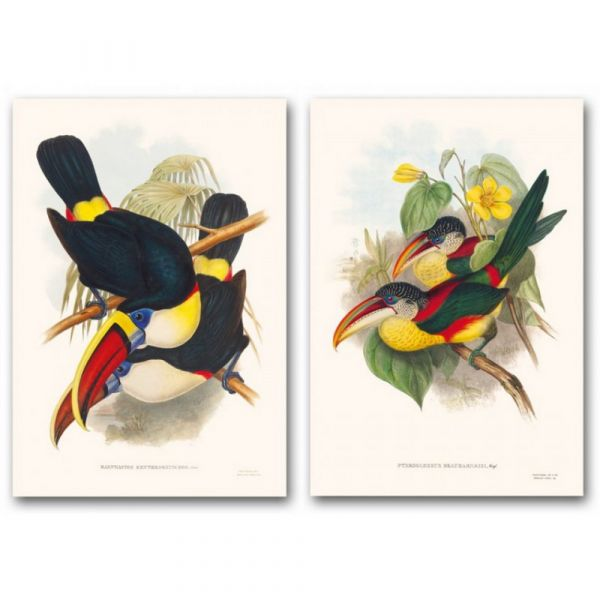 The family of toucans