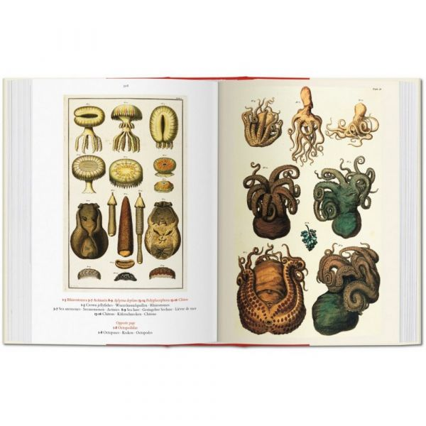Albertus seba. cabinet of natural curiosities