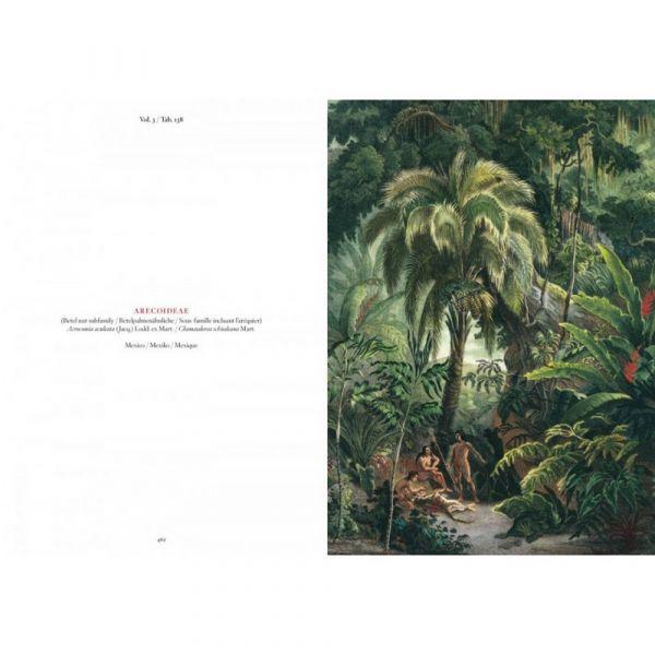 C. f. p. von martius. the book of palms