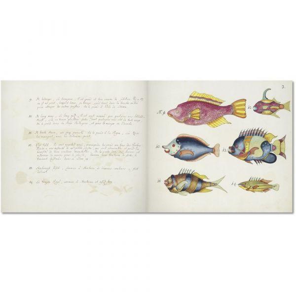 Pesci tropicali delle indie orientali