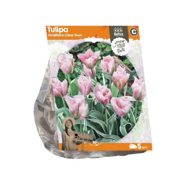 Tulipani viridiflora china town