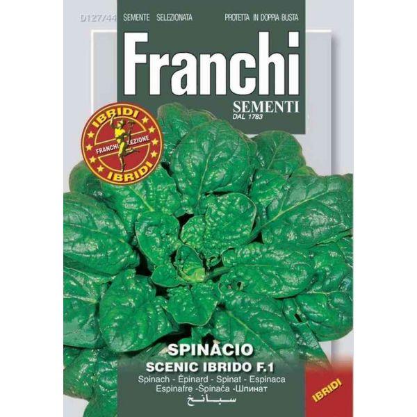 Spinacio-scenic-f1