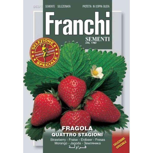 Fragola-4-stagioni