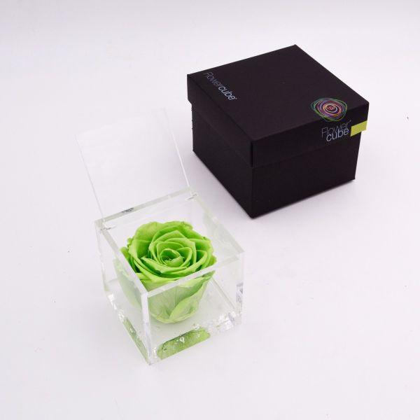 Flowercube | Rosa stabilizzata colore verde (8x8 cm)