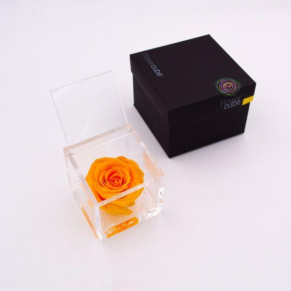 Flowercube   Rosa stabilizzata colore giallo (8x8 cm)