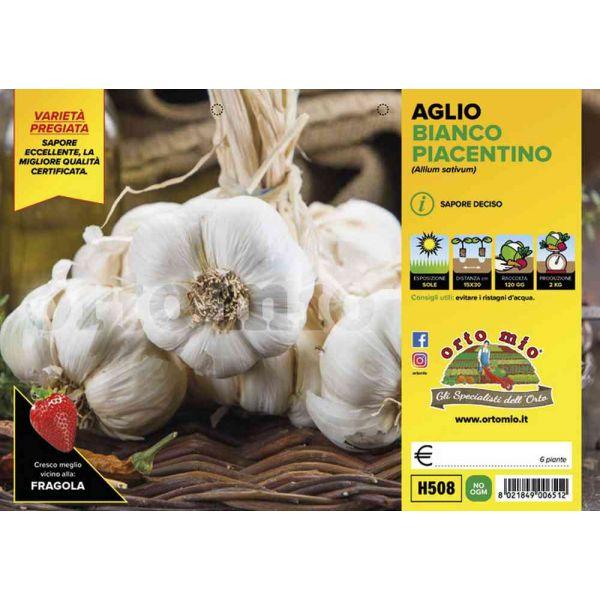 aglio-bianco-piacentino-8021849006512