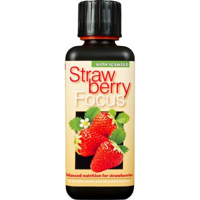 Strawberry focus 300ml