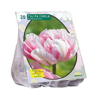 Tulipani doppi finola