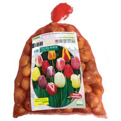 Tulipani darwin assortiti