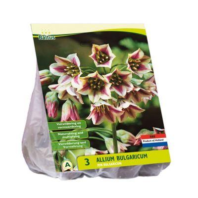 Allium siculum bulgaricum