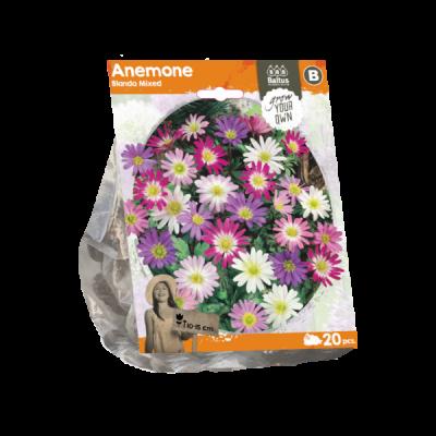 Anemone blanda mix