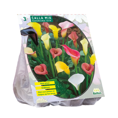Bulbi Calla di Zantedeschia mix