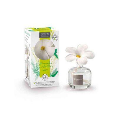 Fragranza con fiore profumato citronella e menta
