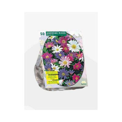 Anemone blanda mix Bulbi x 50