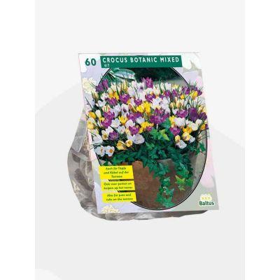 Crocus botanisch mix bulbi  x 60