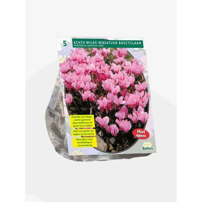 Ciclamino hederifolium donkerr Bulbi x 5