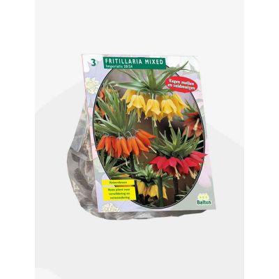 Fritillaria Imperialis mixed bulbi x 3