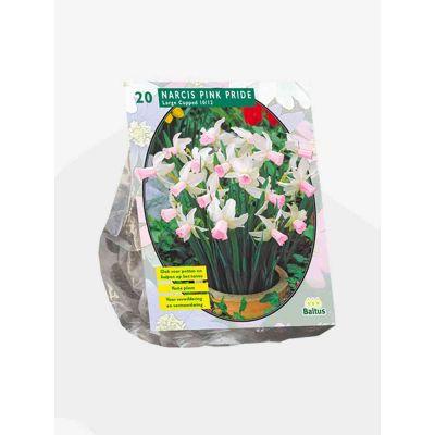 Narcis mini pink pride