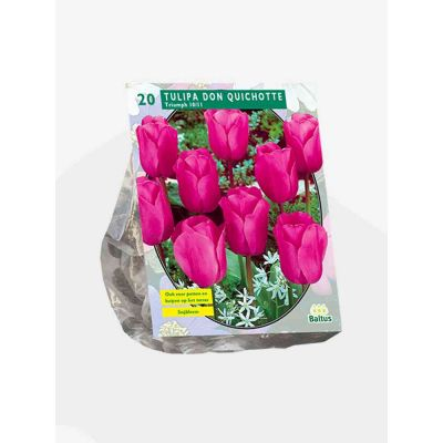 Tulipani pink creation bulbi x 25