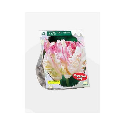 Tulipani pink vision parkiet bulbi x 12