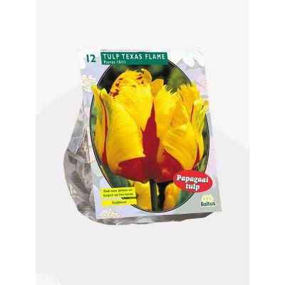 Tulipani texas flame parkiet bulbi x 12