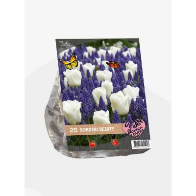 Urban flowers borders beaut bulbi x 25