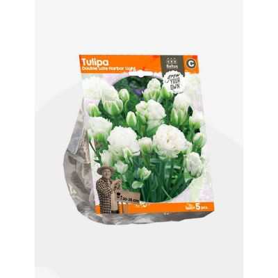 Tulipani double late harbor bulbi x  5