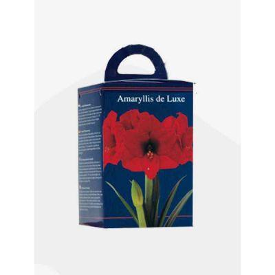 Amaryllis in doos rood bulbi x  4