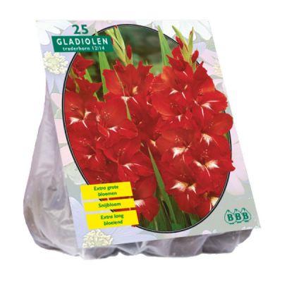 Bulbi Gladiolus traderhorn