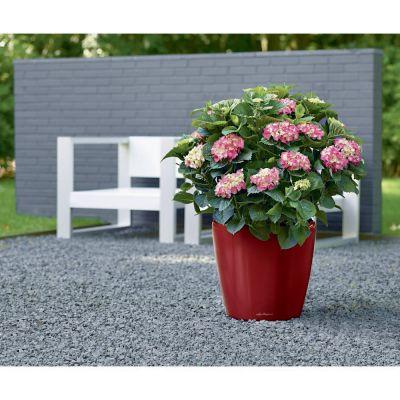 Vaso classico lechuza con set di irrigazione rosso cm. 28