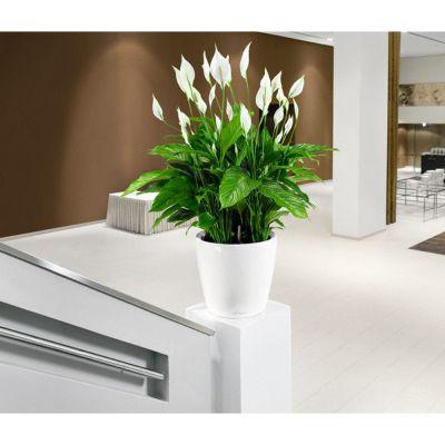 Vaso classico lechuza con set di irrigazione bianco cm. 35